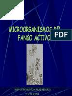 06._Protozoos
