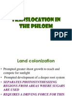 10-Translocation in the Phloem