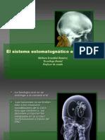 Sistema Estomatognatico Para Anatomia Bucodentaria
