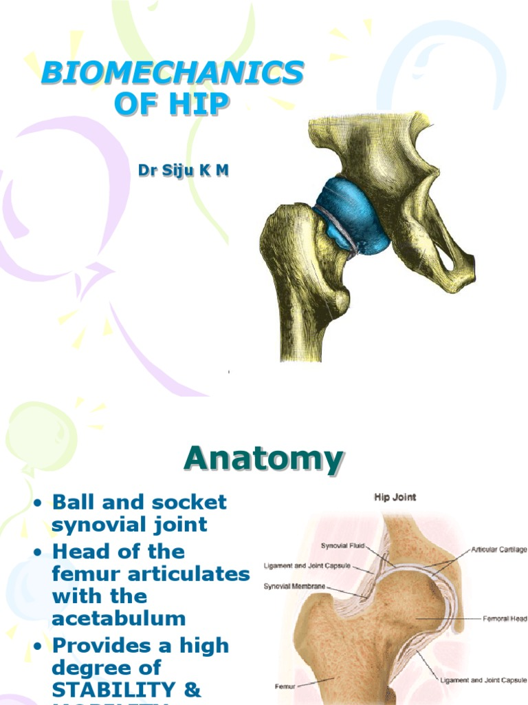 Biomechanics Of Hip Joint Hip Musculoskeletal System