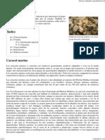Caracola - Wikipedia, La Enciclopedia Libre