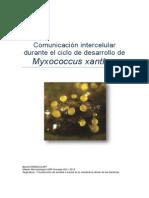 La communication intercellulaire chez Myxococcus xanthus (langue