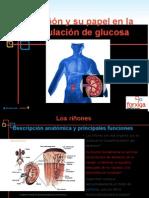 El Riñón y Glucosa
