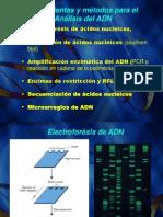 2. Tecnicas moleculares