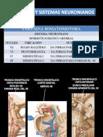 Columnas y Sistemas Neuronianos