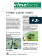 Insect Pests of Cucurbit Vegetables
