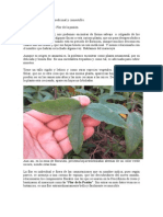 Alimentación - Passiflora Edulis - Maracuya