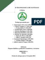 ORGANOS LINFOIDES PRIMARIOS Y SEGUNDARIOS.docx