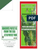Pest Diseases of Plantain in Guyana