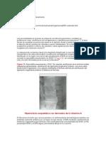 Patologia Osea