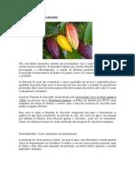 Plantação sustentável de chocolate