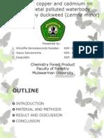 Presentation Pollutan Bender