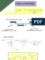 Peptide Si Proteine