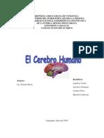 Historia Del Cerebro Humano
