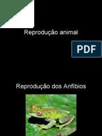 Reprodução anfibios, répteis, aves, mamiferos