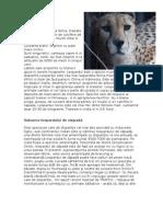 Www.referat.ro Leopardul6650f225