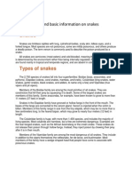 Types and Basic Information on Snakes
