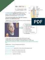 Anatomy Final (1)