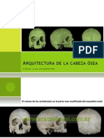 Arquitectura cráneo 1