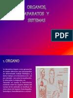 organos aparatos y sistemas.pptx
