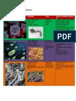 Innate Targeting of Pathogens