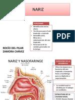 Nariz y Oido - Rocio Zamora