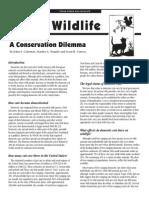 Cats & Wildlife - A conservation dilemma