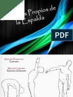 Músculos Propios de La Espalda