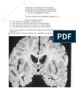 Taller Neuroanatomia Funcional