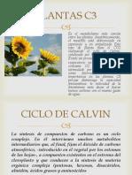 PLANTAS C3t.pptx