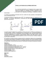 Determinación de La Actividad de Glutamina Sintetasa
