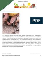 Respiración artificial - Mascotas Online
