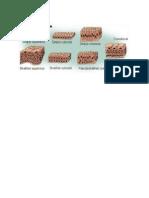 Jenis Jaringan Epitel(1)