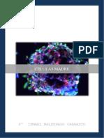 Celulas Madre.docx