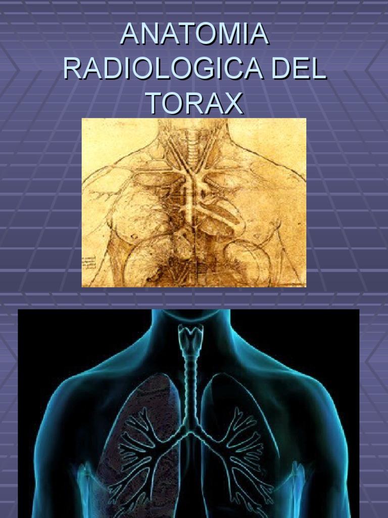 Anatomia radiologica del torax