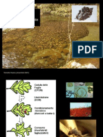 Cenni Ecologia Fluviale Gennaio 2013 II Parte