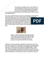 evolution essay 1