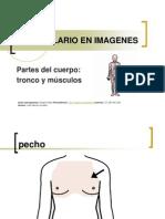 PC_Tronco y Musculos