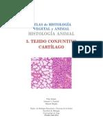 A Conectivo Cartilago