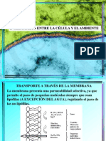 4 Laap-Anº12 1º Biologia Transporte_guianº4