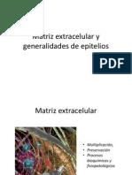 2. Matriz Extracelular, Epitelios