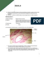 Guia- Practicos 10 Al 12 - SEGUNDO SEM 2013 Definitivo