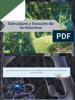 Exposicion de Fisiologia de La Neurona...