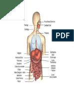 Procesos Químicos de La Digestión