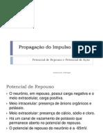 Neurofisiologia Potencialderepousoeao 130110191506 Phpapp01