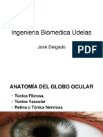 Anatomia Globo Ocular1146