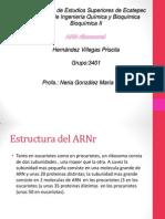 arnribosomal