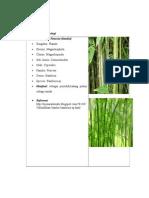 klasifikasi tanaman dan buah