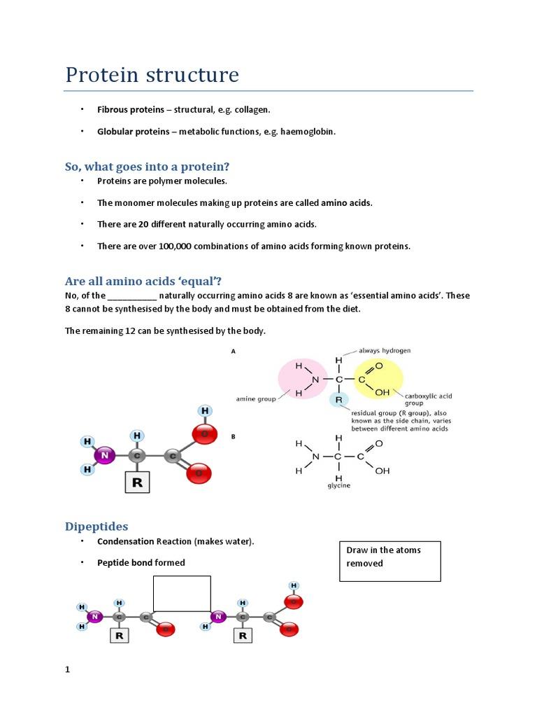 Uncategorized Protein Structure Worksheet protein structure worksheet tecnologialinstante sharebrowse