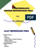 Sistem Reproduksi Pria.baru